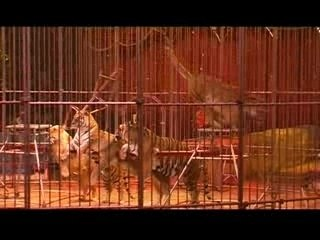 Gala du Festival International du Cirque de Monte-Carlo