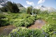 Le jardin Alpin du Lautaret fête ses 120 ans 2