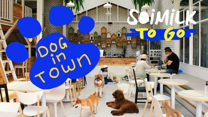 Soimilk To Go: Dog In Town Ari
