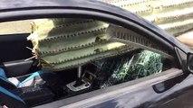 un cactus géant transperce une voiture