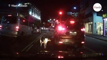 Il abandonne son chien à un feu rouge, mais n'avait pas pensé à un détail qui pourrait tout changer