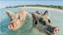 Top 10 des lieux où les animaux sont rois !