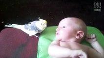 Dieser Vogel trifft zum ersten Mal auf das Baby. Mit seiner Reaktion überrascht er alle