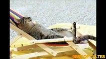 Quand les chats dorment dans positions bizarres !