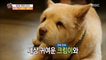 [HOT] perform an entertainment show with one's companion animals, 섹션 TV 20190711