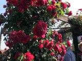 Chamboeuf un village jardin - Par les villages - TL7, Télévision loire 7