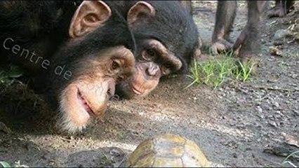 Fun for each family funny  Monkeys 2019 تحشيش قرود  & ضحك