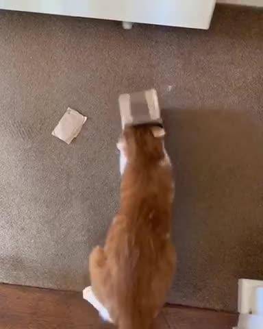 Cat Wrestles with Tiny Box