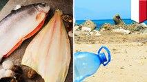 Dari sendok sampai bungkus permen ditemukan dalam perut ikan ini - TomoNews