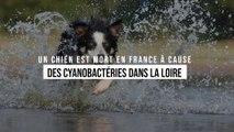 Un chien est mort en France à cause de cyanobactéries