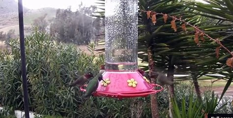 Cute Colorful Hummingbirds at Feeder | Most Colorful Birds | Nature is Amazing