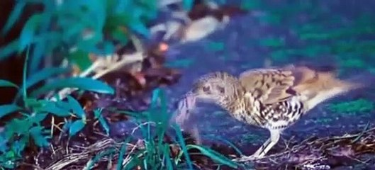 Beautiful Wild Birds | The Parent Birds Feeding Their young baby birds | Nature is Amazing