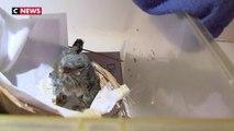 Canicule : un hôpital à la rescousse des animaux