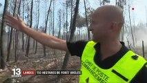 Landes : plus de 150 hectares de pins ravagés par un incendie