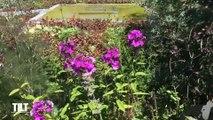 TILT - 12/07/2019 - Chaumont-sur-Loire : un musée à ciel ouvert - Partie 2