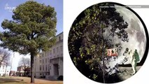 'Moon Trees' May Grow in Your City From Seeds That Went to Space