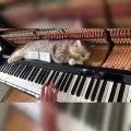 Admirez ce chat qui a de très bons goûts musicaux !