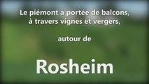 DNA - Le piémont à portée de balcons, à travers vignes et vergers, autour de Rosheim