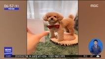 [투데이 영상] '사진 속 포즈와 똑같죠?'…영리한 강아지