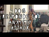 Service Dog Stops Anxiety Attack