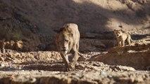 The Lion King: Trouve Ton Rugissement (French)