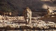 The Lion King: Trouve Ton Rugissement (French Subtitled)