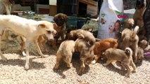 EDİRNE Sokağa terk edilen yavru köpekler sahiplendirilmeyi bekliyor