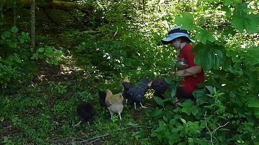 Joel feeding the chickens