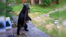 En el jardín de casa...duelo entre perro y oso
