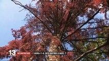 Sécheresse : dans les Vosges, les sapins meurent de soif
