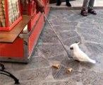 """Papağanın dondurmacıyla """"imtihanı"""" güldürdü"""