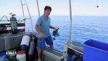 """Nouvelle-Calédonie : la technique de l'""""ADN environnemental"""" au secours de la biodiversité sous-marine"""
