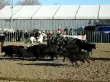 Tri de bétails salon cheval passion Avignon