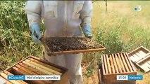 Consommation : le miel bientôt mieux contrôlé