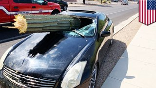 Massive cactus spears through windshield in Arizona car crash