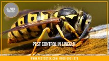 Pest Control Lincoln _ Pest Control Exterminator Services in Lincoln _ Wasps Nests