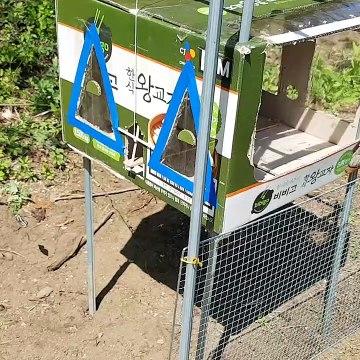 Creative Top Down Bird Trap, Building Cardboard, DIY Bird Trap Technology