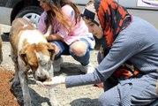 Köpek sevgisiyle görenleri şaşırtan genç kız, aç kalmak pahasına topladığı harçlıklarla sokak hayvanlarını besliyor
