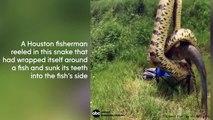Un homme pêche un poisson enroulé par un serpent