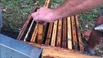 Jura: les abeilles ont souffert  de la météo