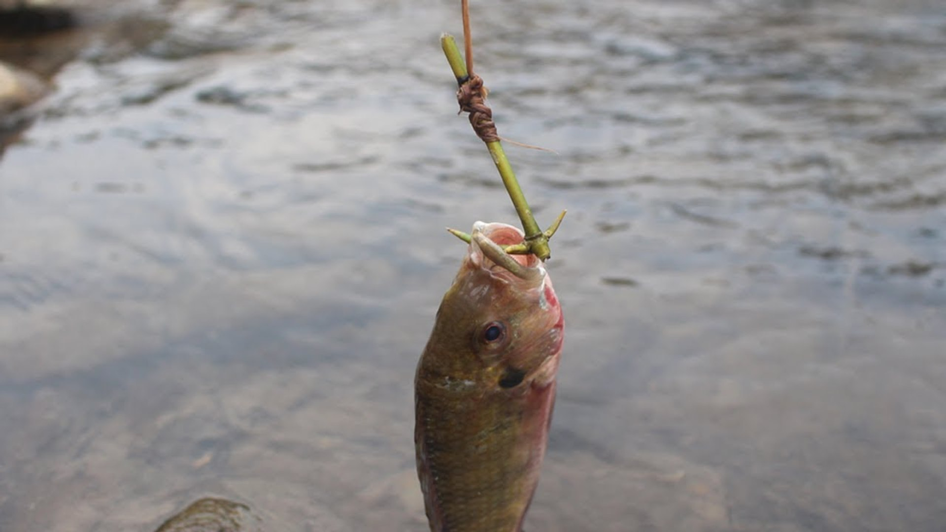 Primitive Technology: Simple fish traps with primitive technology.
