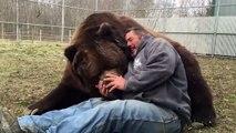 Amitié incroyable entre un homme et son ours énorme