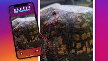 Votre soutien-gorge usagé peut sauver la vie d'une tortue