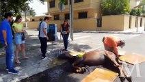 Caballo sufre golpe de calor en sur de Tamaulipas