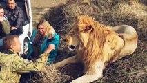 Ce russe joue avec son gros lion... Flippant