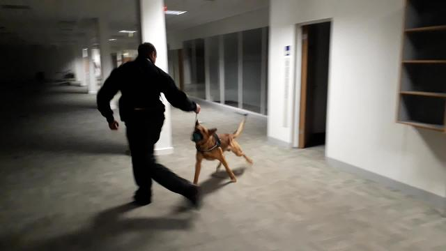 Dog training at former AXA offices
