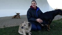 Man reunited with dogs
