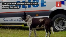 Elderly Dog Stayed Overnight in the Wilderness With a Lost 3-year-old, Then Led Rescuers to Her INEWS