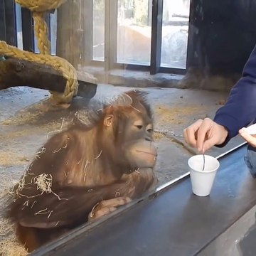 Funny monkeys will make you laugh hard