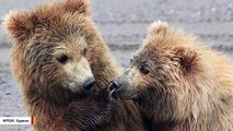 This Adorable Photo Of One Bear Appearing To Shush Another Bear Goes Viral